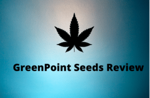 greenpoint seeds bank