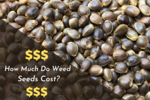 How Much Do Weed Seeds Cost