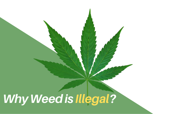 Why Weed is Illegal